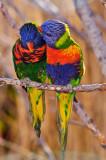 Lorikeets - Denver Zoo