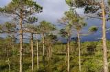 Kemeri National Park