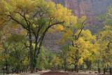 Zion National Park (Zion¹ú¼Ò¹«Ô°)