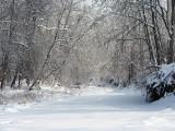The Creek's Frozen Path
