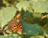 2098 Butterfly-2.jpg