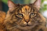 IMG_7107 cats.jpg
