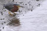 IMG_3233 birds.jpg