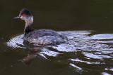 IMG_4968 birds.jpg