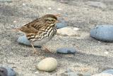 IMG_9794 birds.jpg