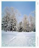 2008年岁末东北雪乡之旅