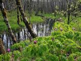 Wetland     IMG_3208a.jpg