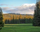 Mt. Adams, Elk in Muddy Meadows       IMG_4733a.jpg