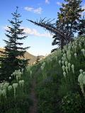 Goat Mtn Trail