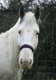 Casper the Friendly Horse