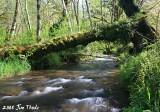 Lot 1 -  Mill Creek
