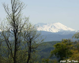 Mt St Helens from Lot 7