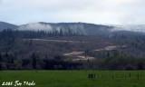 Cinebar Ridge  - From HWY 508