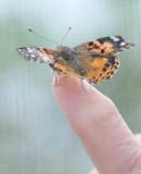 Butterfly Garden 09
