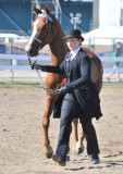 Horseshow '09