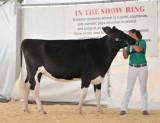 Cow Show '09