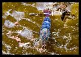 Colorful Shrimp