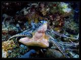 Wildside Turtle
