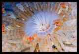 Colorful Tube Amenome