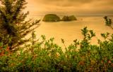 Sea Stacks, Cape Meares State Park (5), Oregon Coast