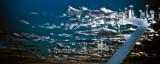 Communication Mast - Rhapsody of the Seas