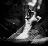 A big yawn