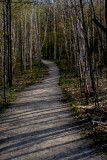 Birch Trail.jpg