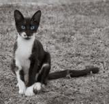 cat_1010038w.jpg
