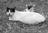 cat_1010235-127w.jpg
