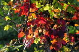 Beginning of Fall Season