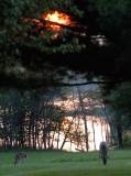 Treetop Fire