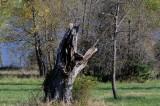 Favorite Broken Tree