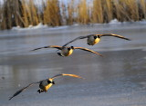 Flyining in Formation