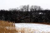 Winter by the Cornfield