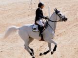 Beautiful Jumping Horses (2 images)
