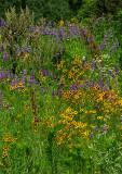 Native Kansas Prairie Wildflowers