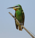Oman 2008 - birds