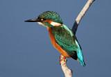 Birding in the UK