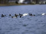 Count your ducks