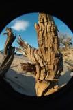 Sentinel Logs