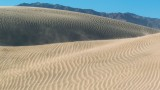 Dunes Reborn