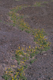 Flowerway