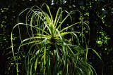 backlit greens