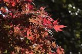 Autumn '09