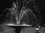 Fountain - Wellington Botanic Gardens