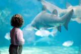 Angelica at Crete Aquarium