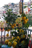 Lemons in Possitano.jpg