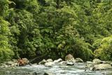 Enjoying the River, Arenal, Costa Rica