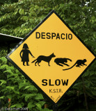 Slow! Della Chasing Animals!