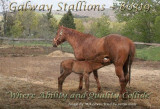 Stable image for RanchMom